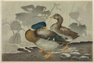 A pair of ducks by a lotus pond. Kobayashi Kiyochika; Japanese, 1847-1915. Date: 1879. Dimensions: 25.8 × 38.5 cm (10 3/16 × 15 3/16 in.). Color woodblock print; oban. Origin: Japan. Museum: The Chicago Art Institute, Chicago, U. S. A.A pair of ducks by a lotus pond. Kobayashi Kiyochika; Japanese, 1847-1915. Date: 1879. Dimensions: 25.8 × 38.5 cm (10 3/16 × 15 3/16 in.). Color woodblock print; oban. Origin: Japan. Museum: The Chicago Art Institute, Chicago, USA.. Album. .
