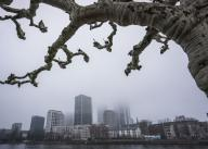 26 January 2020, Hessen, Frankfurt/Main: The tops of the skyscrapers of the Frankfurt skyline disappear in the haze under a bare plane tree on the banks of the Main. Photo: Frank Rumpenhorst/