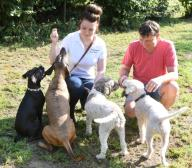 """15 September 2020, Saxony, Eilenburg: The truffle hunters Gunter Kahlow and daughter Josy Marie Horn run with their truffle dogs, the Lagotto Romagnolo """"Frieda"""" and """"Tempi"""", the Bavarian Mountain Sweat Dog """"Resi"""" and the Boxer mixed breed """"Buddy"""" (r-l) on the truffle plantation in Eilenburg, Saxony, which was established ten years ago. As the last months were very dry, they can only expect a lower yield of the culinary valuable but weather-dependent mushrooms during the winter harvest period. On 6500 square meters, they cultivate the Burgundy truffles, which are protected in Germany, and the small family business processes them into products made of and with truffles. Photo: Waltraud Grubitzsch\/dpa"""