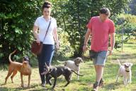 """15 September 2020, Saxony, Eilenburg: The truffle hunters Gunter Kahlow and daughter Josy Marie Horn run with their truffle dogs, the Lagotto Romagnolo """"Frieda"""" and """"Tempi"""", the boxer mongrel """"Buddy"""" and the Bavarian mountain sweat dog """"Resi"""" (r-l) on the truffle plantation in Eilenburg, Saxony, which was established ten years ago. As the last months were very dry, they can only expect a lower yield of the culinary valuable but weather-dependent mushrooms during the winter harvest period. On 6500 square meters, they cultivate the Burgundy truffles, which are protected in Germany, and the small family business processes them into products made of and with truffles. Photo: Waltraud Grubitzsch\/dpa"""