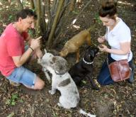 """15 September 2020, Saxony, Eilenburg: The truffle hunters Gunter Kahlow and daughter Josy Marie Horn search for truffles with the truffle dogs, the boxer mongrel """"Buddy"""", the Bavarian mountain sweat dog """"Resi"""", and the Lagotto Romagnolo """"Tempi"""" and """"Frieda"""" (r-l) on the truffle plantation in Eilenburg, Saxony, which was established ten years ago. As the last months were very dry, they can only expect a lower yield of the culinary valuable but weather-dependent mushrooms in the coming winter harvest season. On 6500 square meters, Gunter Kahlow and his daughter cultivate the Burgundy truffles, which are protected in Germany, and which are processed in the small family business into products made of and with truffles. Photo: Waltraud Grubitzsch\/dpa"""