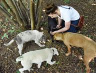 """15 September 2020, Saxony, Eilenburg: The truffle hunter Josy Marie Horn searches for truffles with the truffle dogs, the Bavarian Mountain Sweathound """"Resi"""", the Lagotto Romagnolo """"Frieda"""" and """"Tempi"""" and the boxer hybrid """"Buddy"""" (r-l) on the truffle plantation established by her father Gunter Kahlow ten years ago in Eilenburg, Saxony. As the last months were very dry, they can only expect a lower yield of the culinary valuable but weather-dependent mushrooms in the coming winter harvest season. On 6500 square meters, Gunter Kahlow and his daughter cultivate the Burgundy truffles here, which are protected in Germany and are processed in the small family business into products made of and with truffles. Photo: Waltraud Grubitzsch\/dpa"""