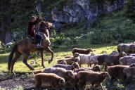 (200713) -- ILI, July 13, 2020 (Xinhua) -- A man herds at the summer meadow in Tekes County, northwest China\'s Xinjiang Uygur Autonomous Region, June 30, 2020. (Xinhua\/Wang Fei