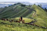 (200713) -- ILI, July 13, 2020 (Xinhua) -- A man herds at the summer meadow in Tekes County, northwest China\'s Xinjiang Uygur Autonomous Region, July 2, 2020. (Xinhua\/Wang Fei