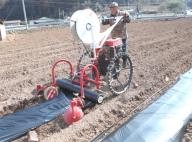 Planting pepper seedlings A farmer operates a machine to lay rows of plastic sheets down on trenches for planting pepper seedlings in a field in Yeongyang, North Gyeongsang Province, southeastern South Korea, on March 31, 2020. (Yonhap)/2020-03-31 10:00:44/